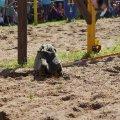Bild 2012_08_burgfest_stargard-turney-003-jpg