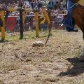 Bild 2012_08_burgfest_stargard-turney-010-jpg