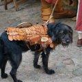 image 2015_08_08-burgfest-stargard-055-ritterhund-jpg