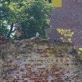 Bild 2015_08_09-burgfest-stargard-084-falkner-deimos-jpg